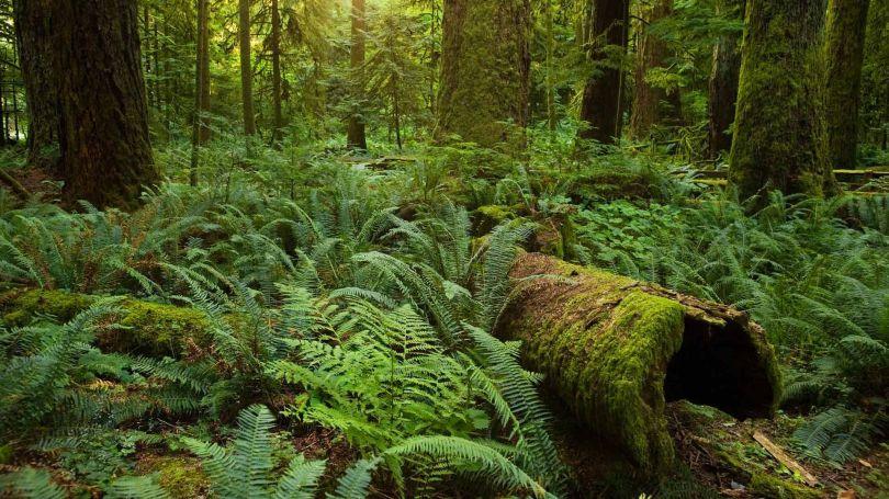 Forêt de Rochechouart - 2