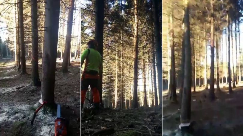Forêt – Arbre - Effet domino - 1