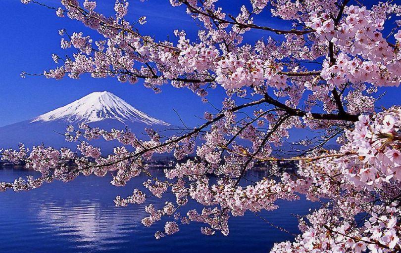 Japon-Cerisiers-en-fleurs - 2