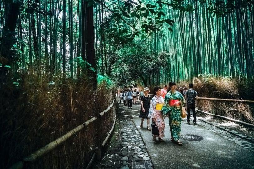 Japon - Jardin - Forêt