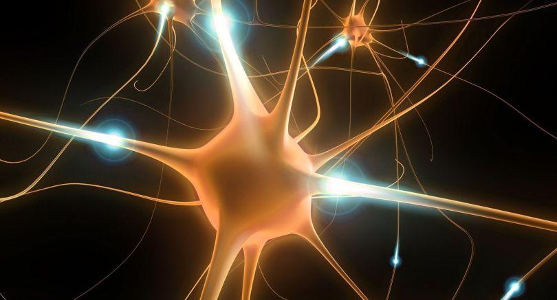 Neurones - 2