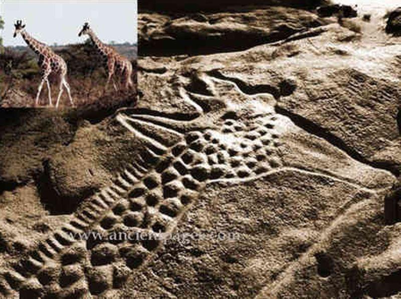 Sculptures d_animaux - Arabie saoudite - 4