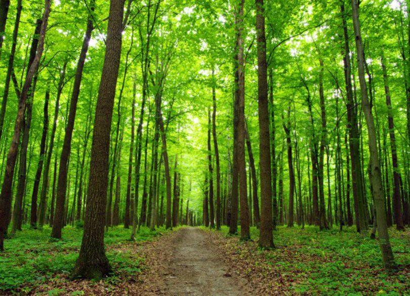 Forêt – 2