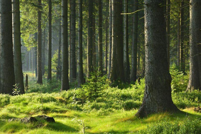 Forêt – 4