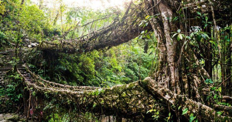 Forêt – 5