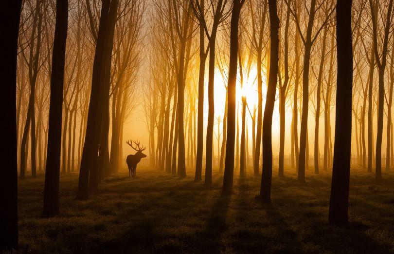 Forêt – A