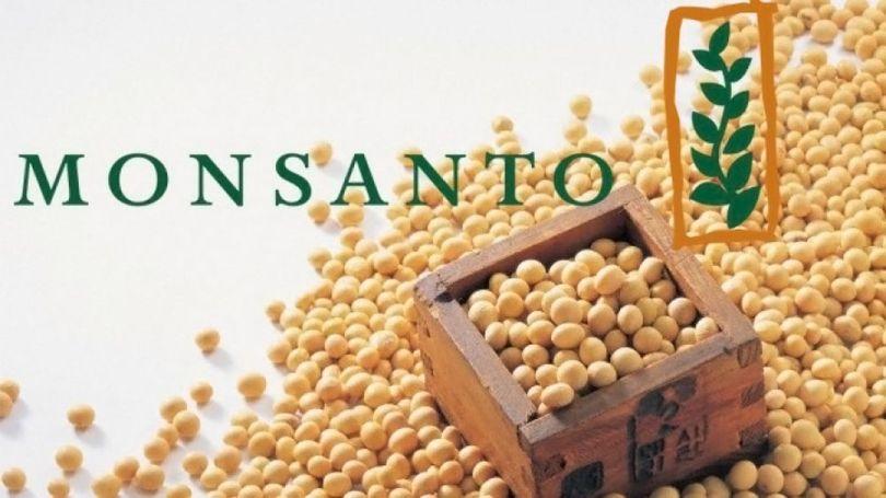 Soja – OGM - 2
