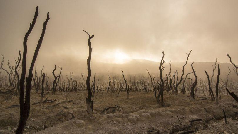Terre désertique