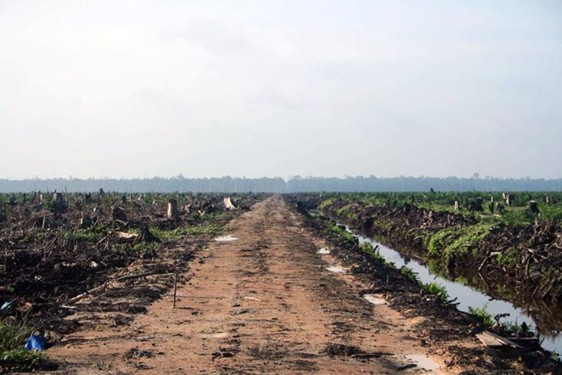 Deforestation - Huile de palme