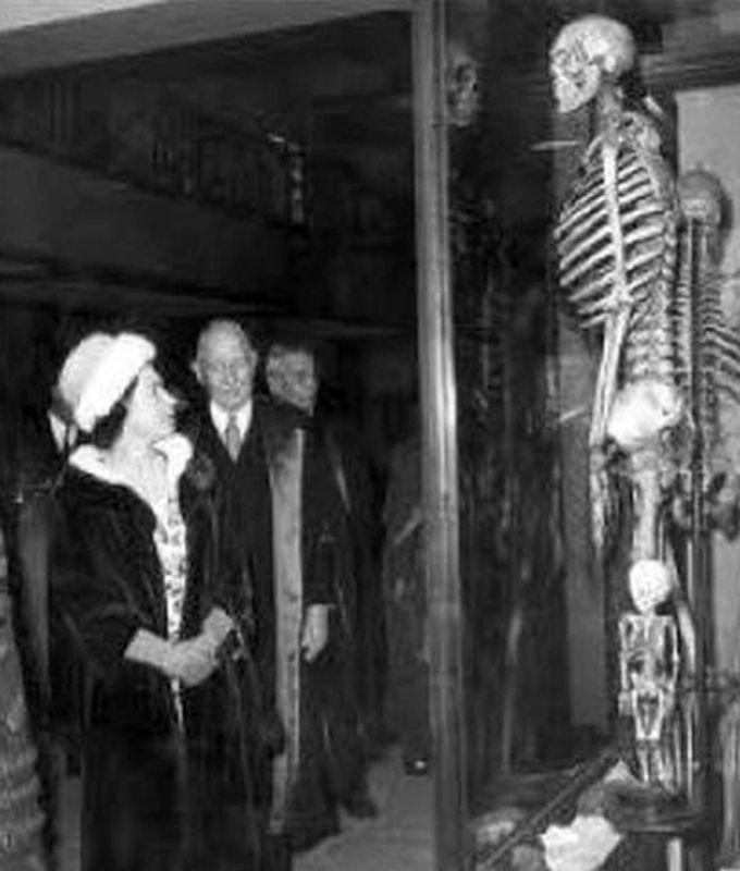 Géant – Humains – Squelette - 1