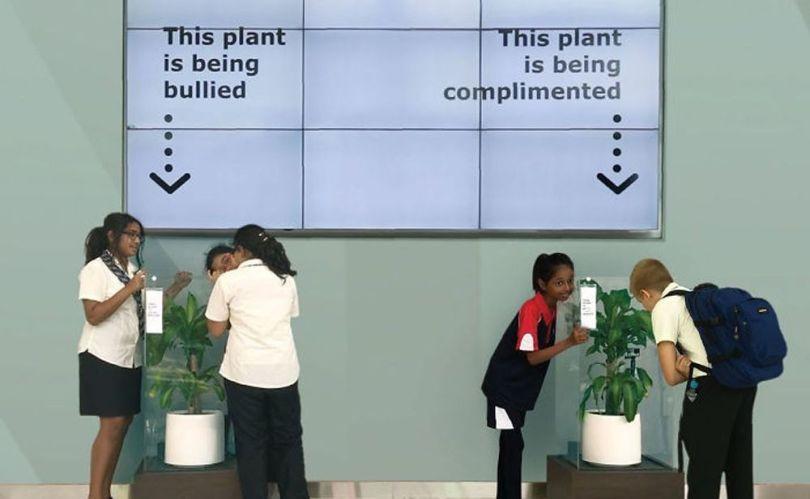 Bully a Plant - 1