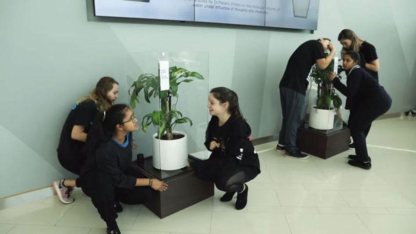 Bully a Plant - 11