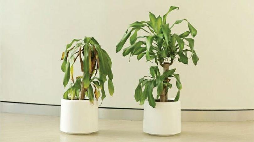 Bully a Plant - 12