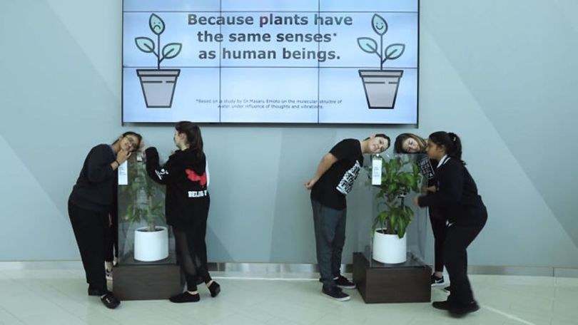 Bully a Plant - 3