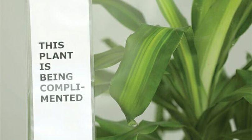 Bully a Plant - 5