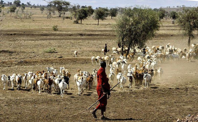 Les Maasaï - 2