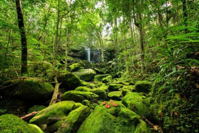 Forêt - 5