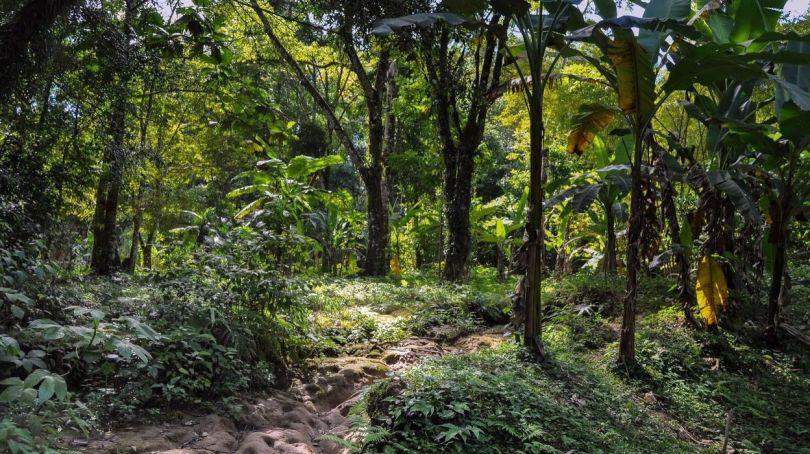 Forêt - 6