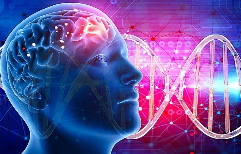 Génétique - Intélligence