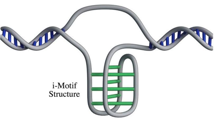 ADN - 2