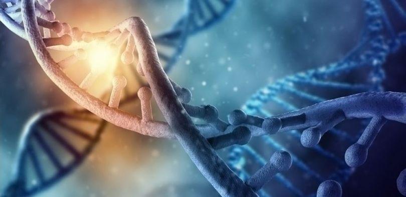 ADN - 4
