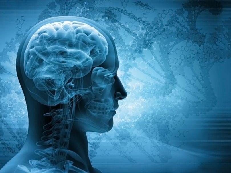 Brain - Cerveau