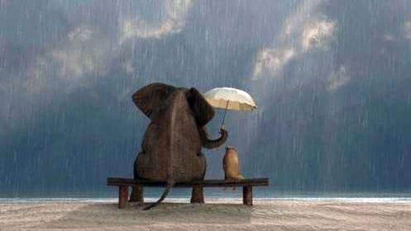 Eléphant - Parapluie