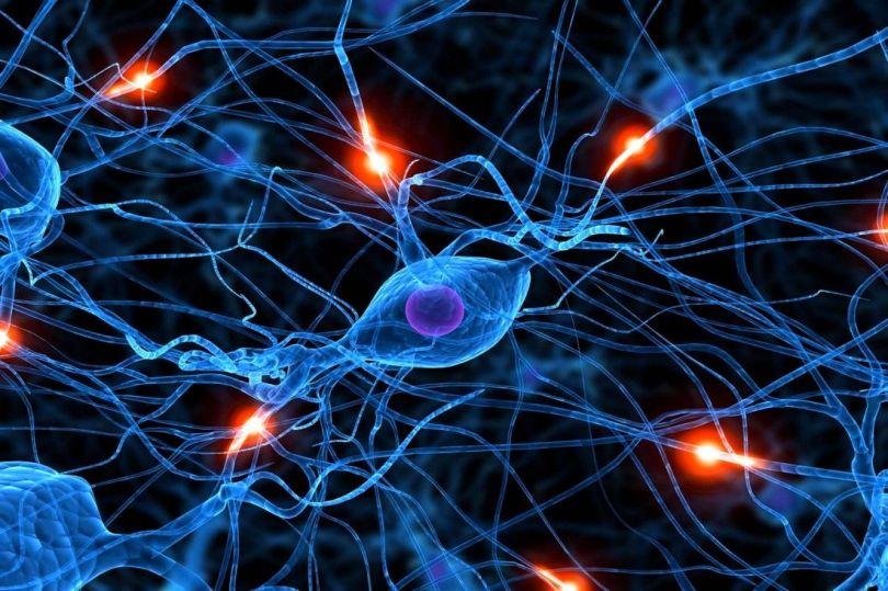 Neurone- Synapse- Cerveau