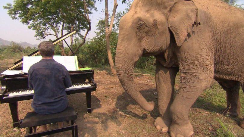 Paul Barton – Piano – Eléphant - 1