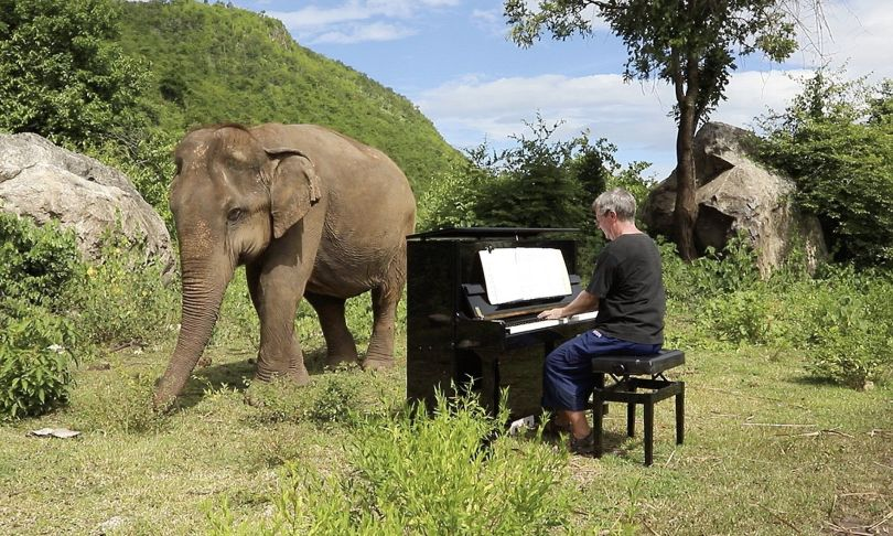 Paul Barton – Piano – Eléphant - 2