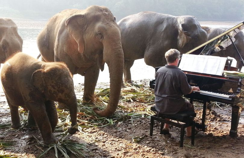 Paul Barton – Piano – Eléphant - 3
