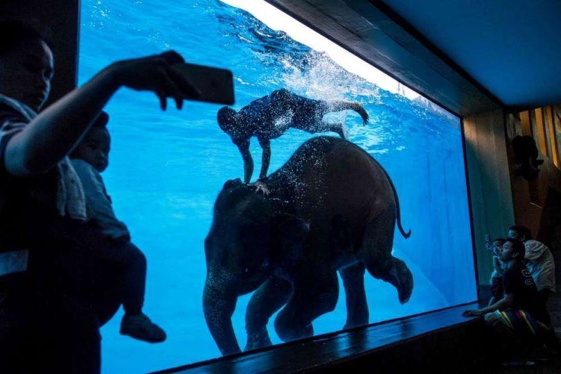 Éléphant – Aquarium – Thaïlande - 1