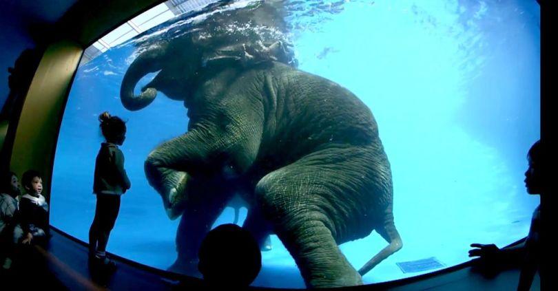 Éléphant – Aquarium – Thaïlande - 2