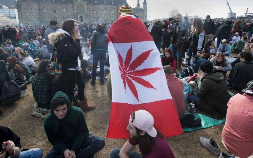 Cannabis - 3