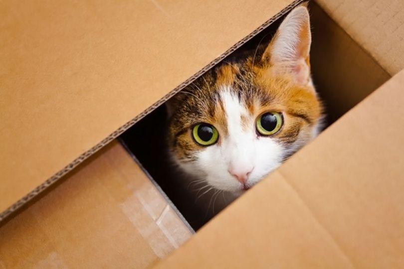 Cat - Boite en carton