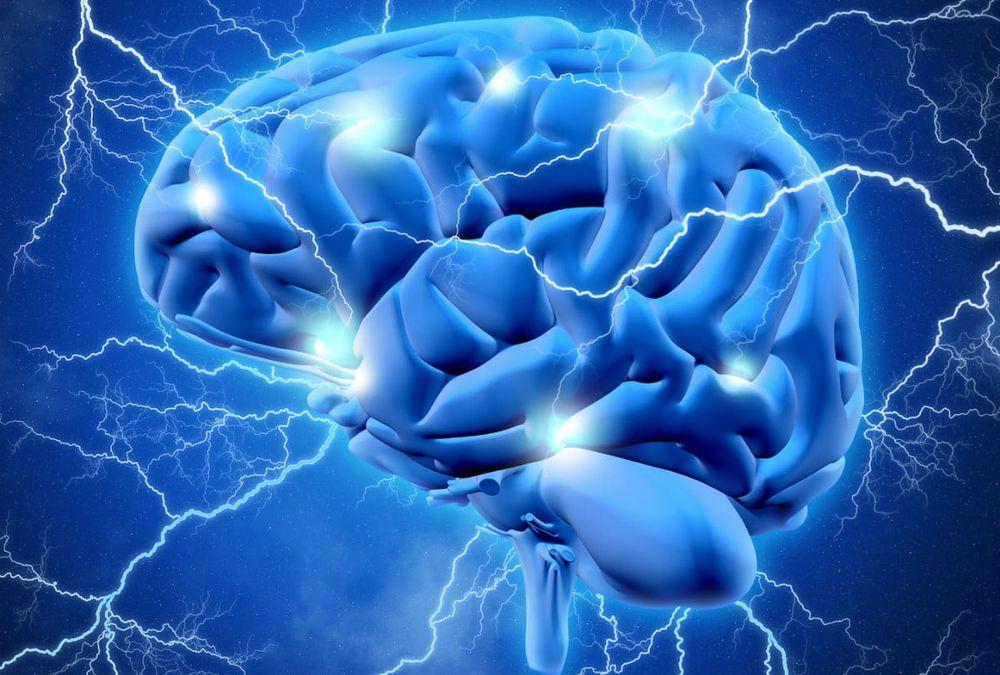 Cerveau - Brain - 2