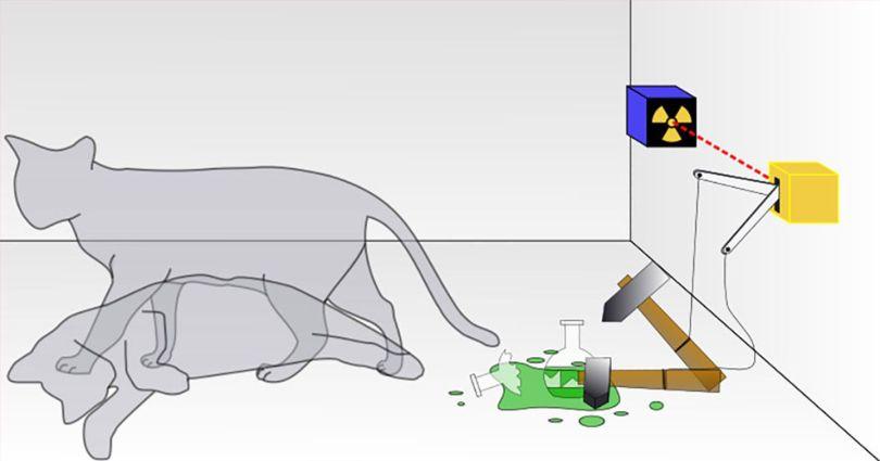 Chat – Schrödinger - Expérience