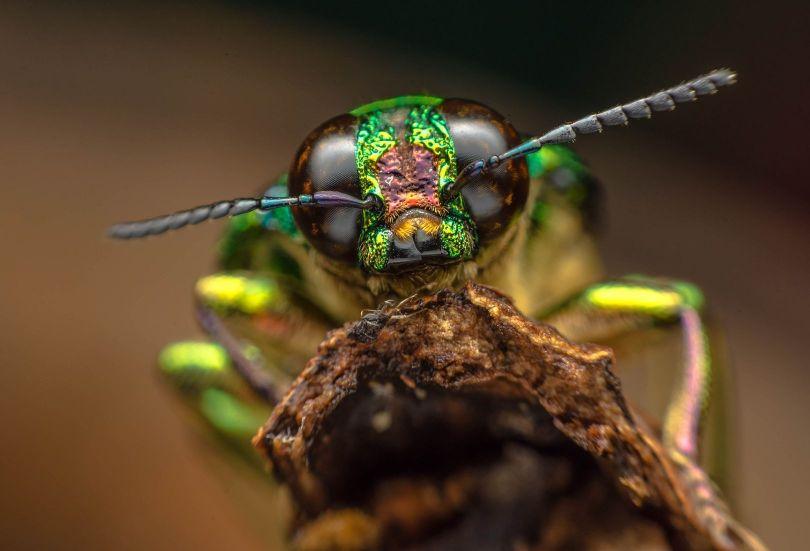 Insecte - 1