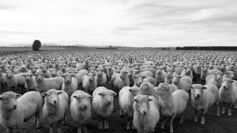 Troupeau - moutons