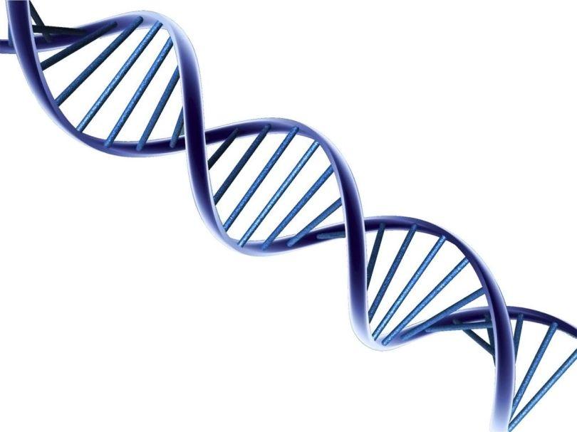 ADN - 1