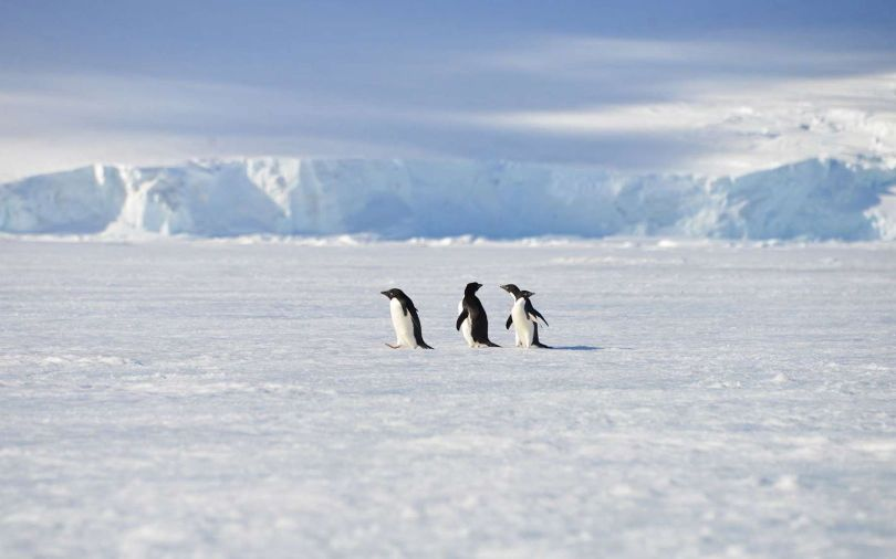 Antarctique - 2
