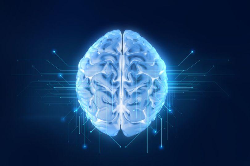Cerveau - Réseau