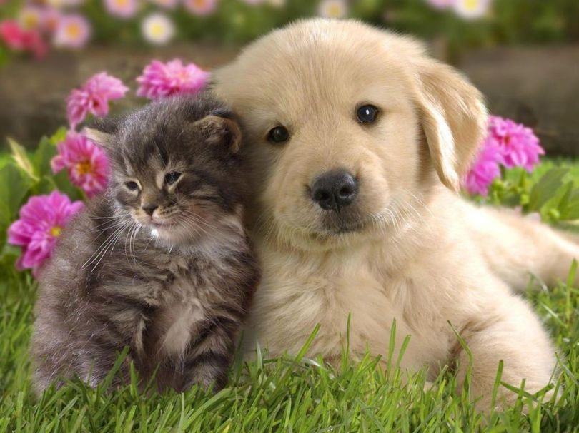 Chatons – Chiots – 1