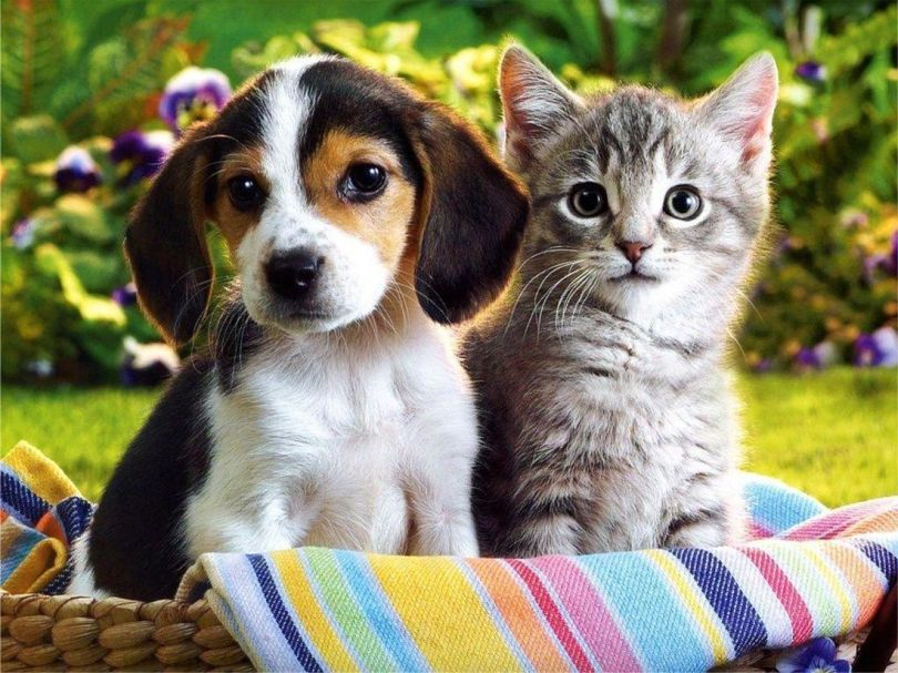 Chatons – Chiots – 2