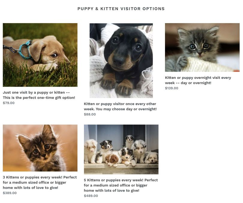Chatons – Chiots – 3