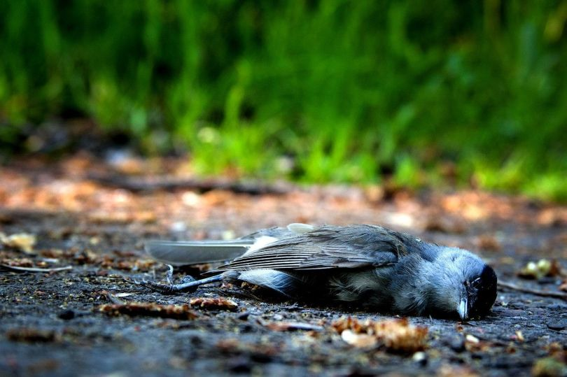 Oiseau - Bird - 1