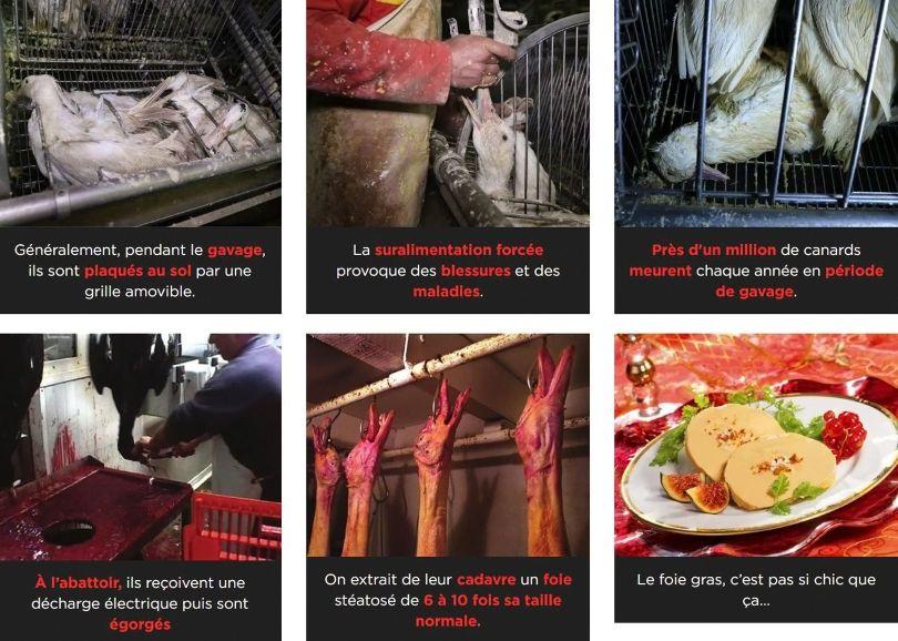 Foie gras - 2