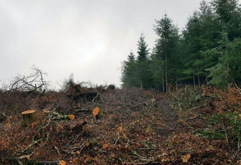 Forêt – France - 3
