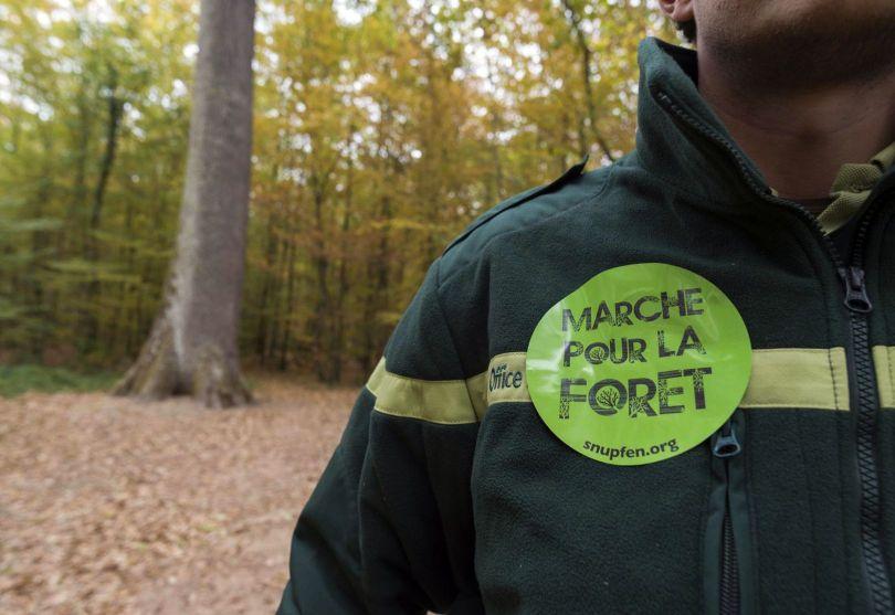 Forêt – France - 5