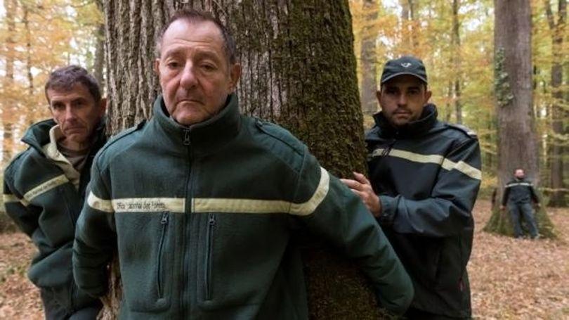 Forêt – France - 6